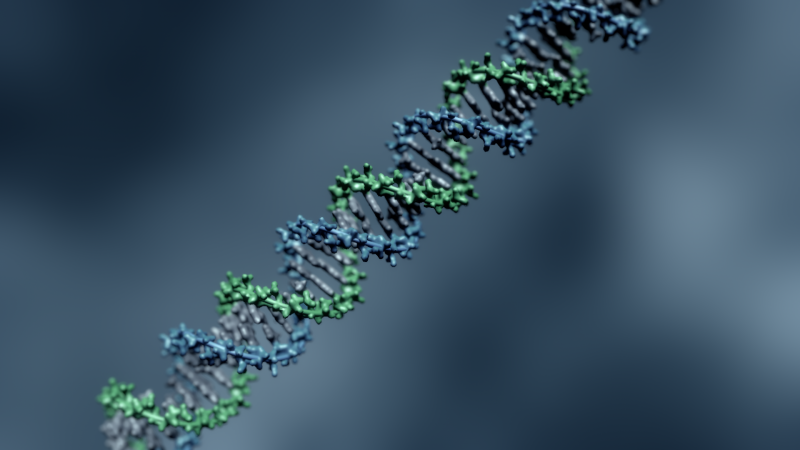 Microsoft's DNA Strand Displacement tool (DSD)