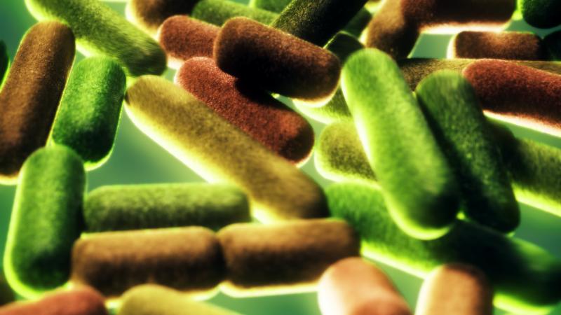 Bacteria illustrations for Harvard University