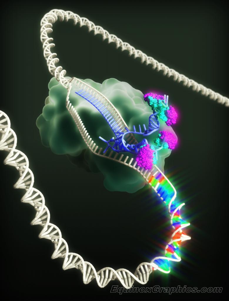 DNA mutagenesis