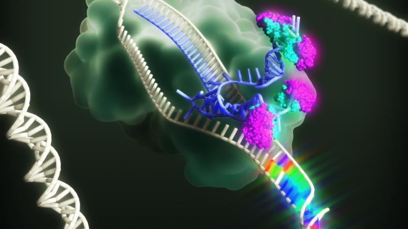 DNA mutagenesis for Stanford University