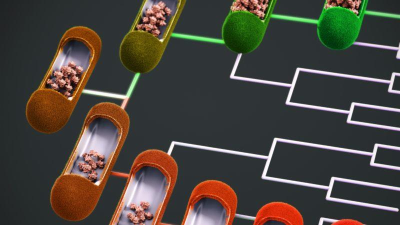 Bacterial Family Trees for Harvard University